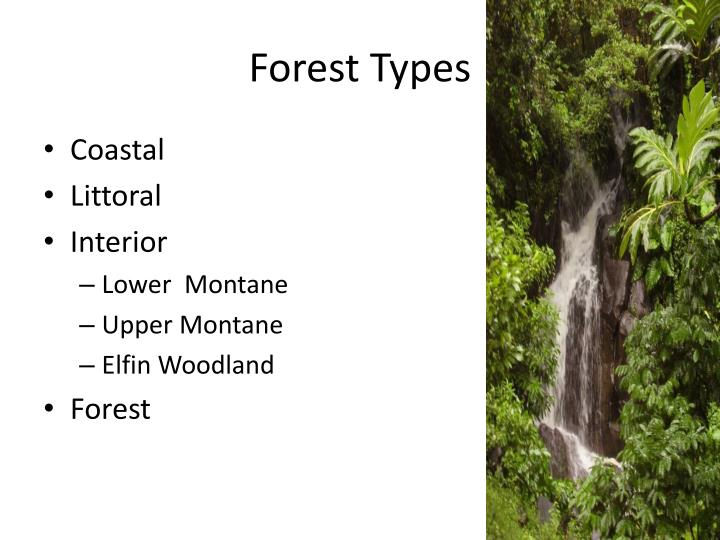 Forest Types