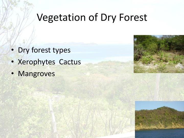 Vegetation of Dry Forest