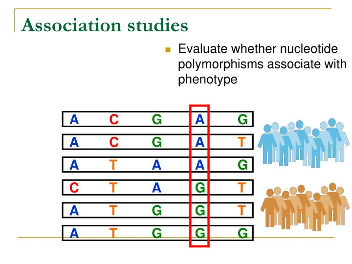 Evaluate whether nucleotide polymorphisms associate with phenotype