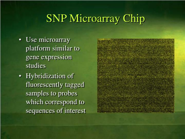 SNP Microarray Chip