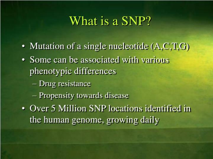 What is a snp