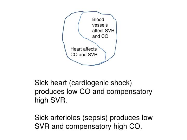 Blood vessels affect SVR and CO