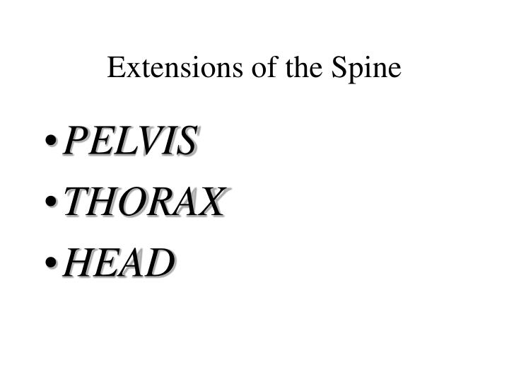 Extensions of the Spine