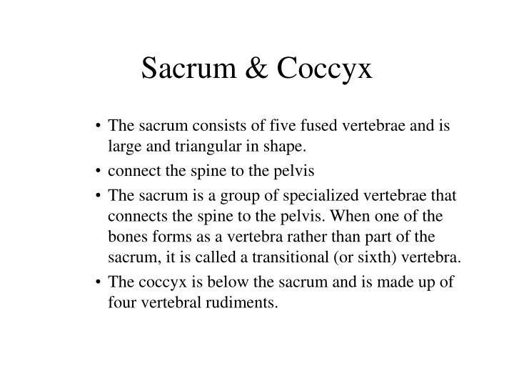 Sacrum & Coccyx