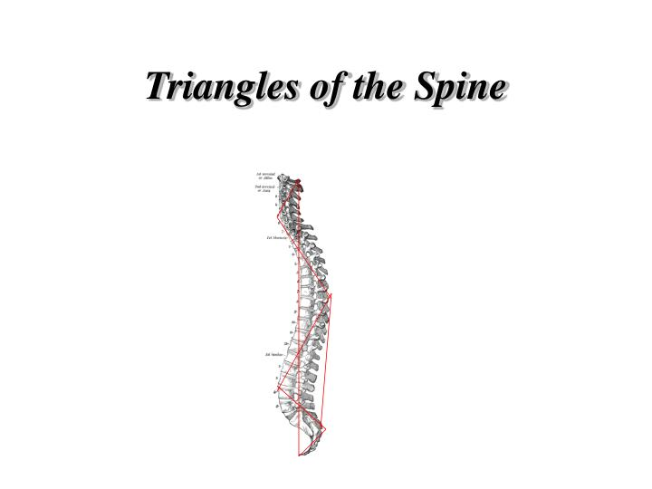 Triangles of the Spine