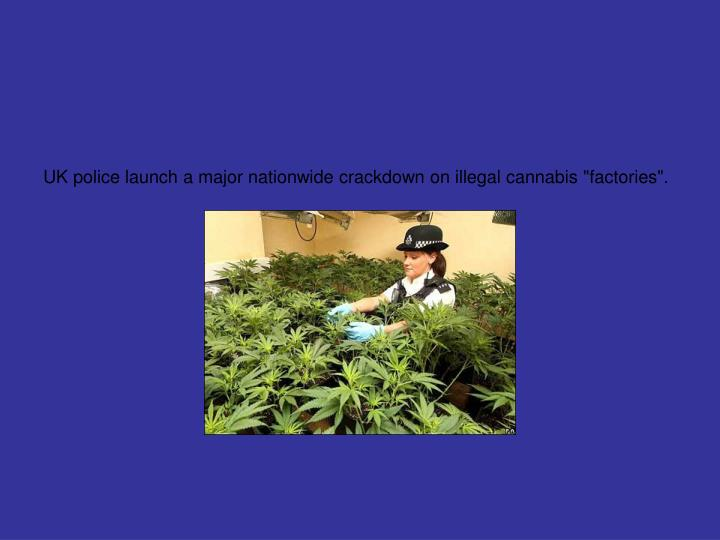 "UK police launch a major nationwide crackdown on illegal cannabis ""factories""."