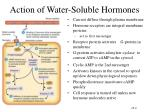 action of water soluble hormones
