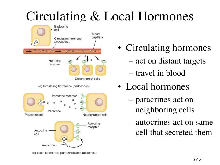 Circulating & Local Hormones