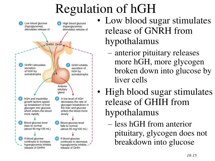 Regulation of hGH