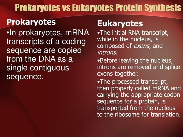 Prokaryotes vs Eukaryotes Protein Synthesis