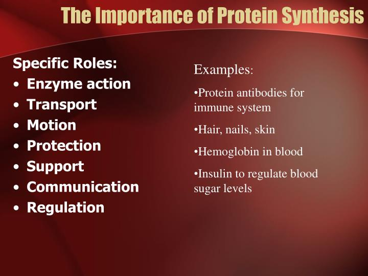 The Importance of Protein Synthesis