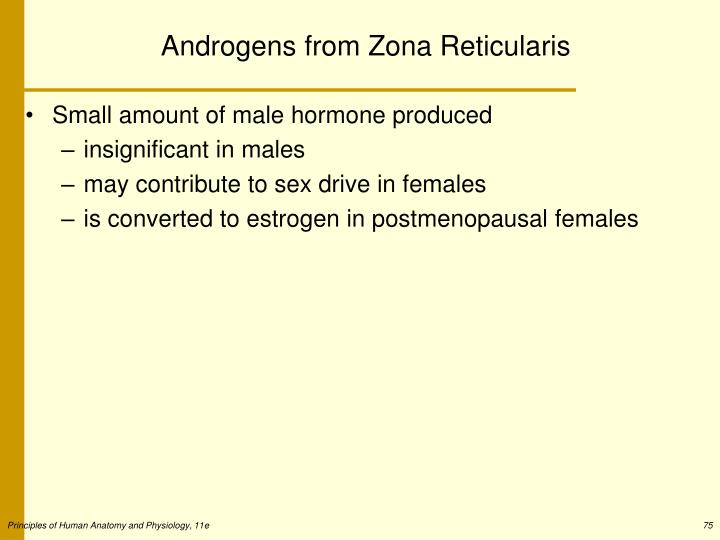 Androgens from Zona Reticularis
