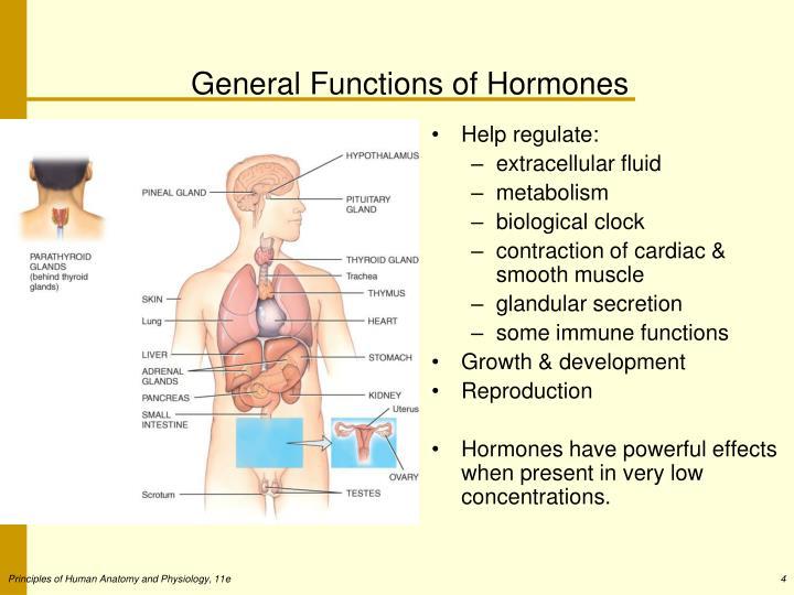 General Functions of Hormones