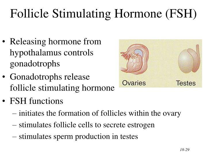 Follicle Stimulating Hormone (FSH)