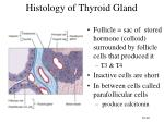 histology of thyroid gland
