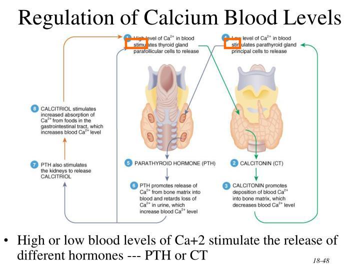Regulation of Calcium Blood Levels