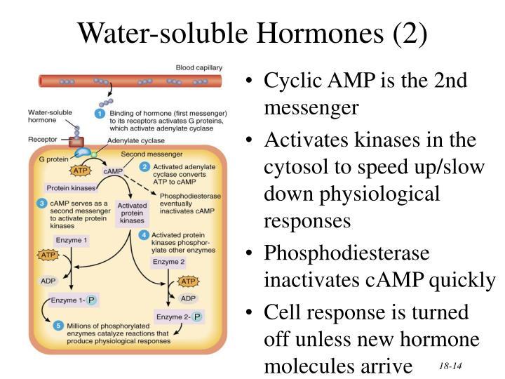 Water-soluble Hormones (2)