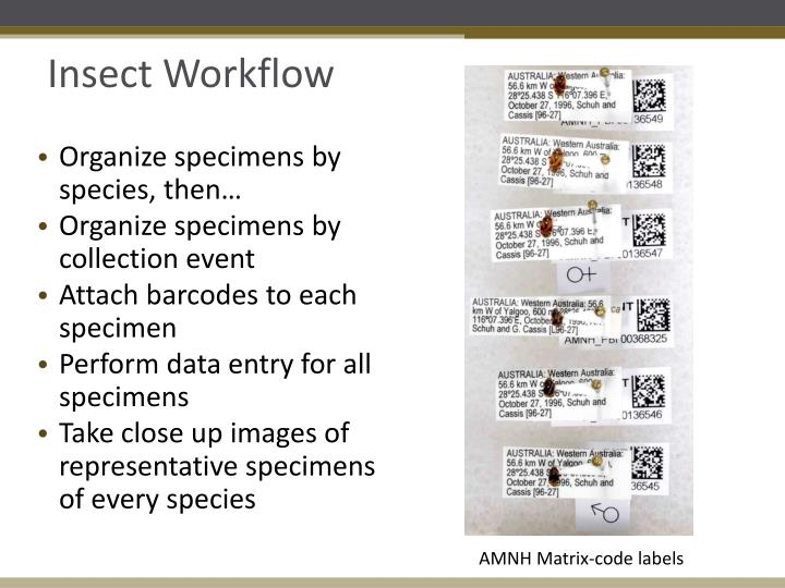Insect Workflow
