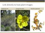 link directly to host plant images