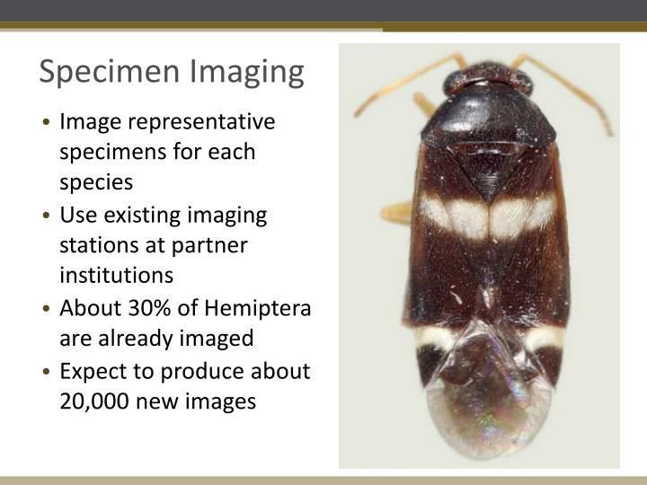 Specimen Imaging