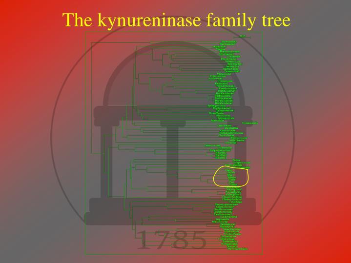 The kynureninase family tree