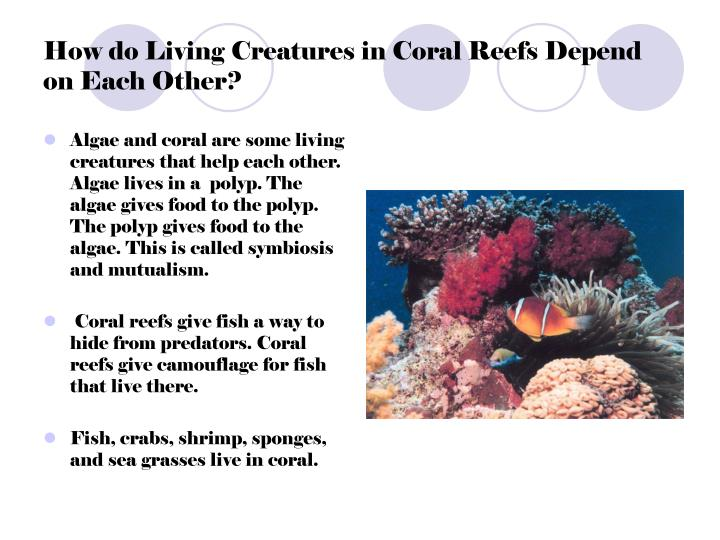 How do Living Creatures in Coral Reefs Depend on Each Other?