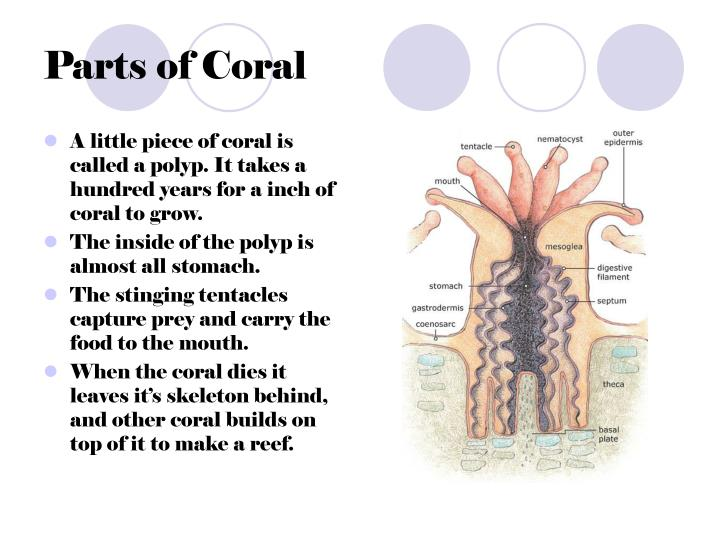 Parts of coral