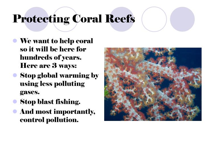 Protecting Coral Reefs