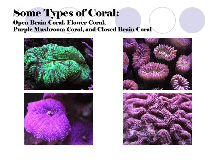 Some Types of Coral: