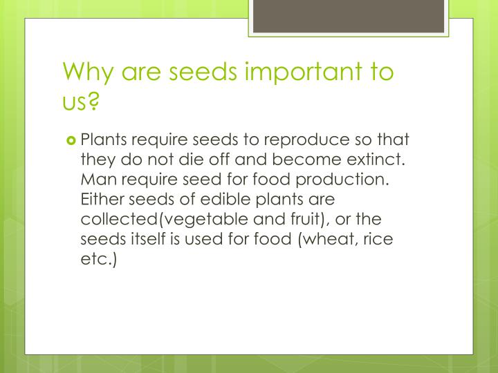 Why are seeds important to us?