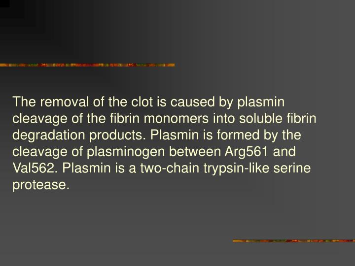 The removal of the clot is caused by plasmin cleavage of the fibrin monomers into soluble fibrin degradation products. Plasmin is formed by the cleavage of plasminogen between Arg561 and Val562. Plasmin is a two-chain trypsin-like serine protease.