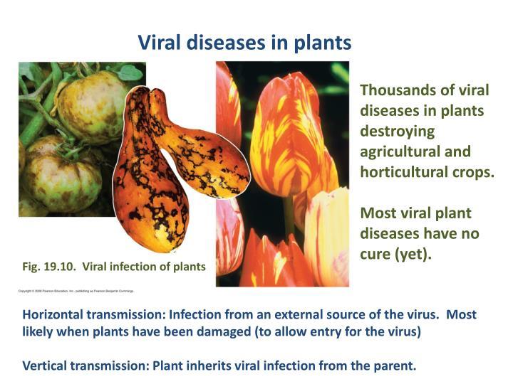 Viral diseases in plants