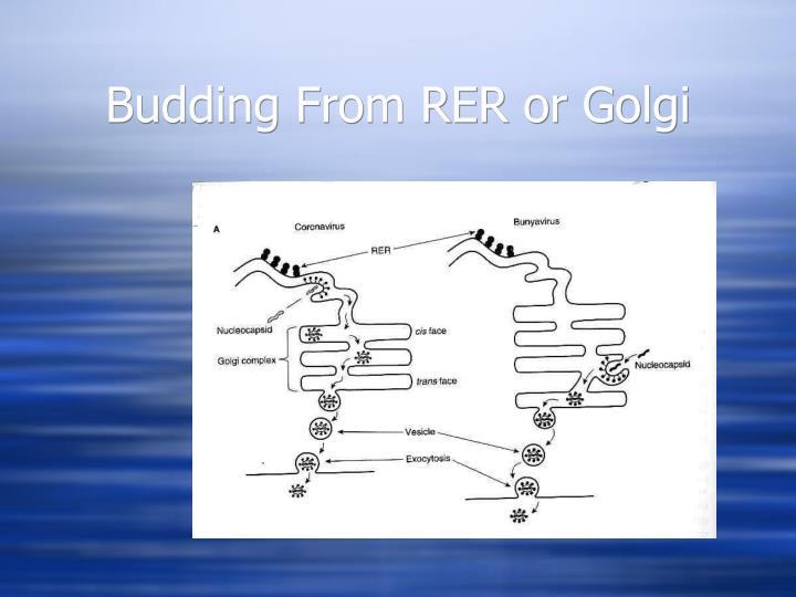 Budding From RER or Golgi