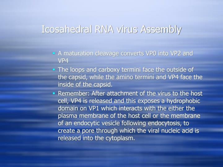 Icosahedral RNA virus Assembly
