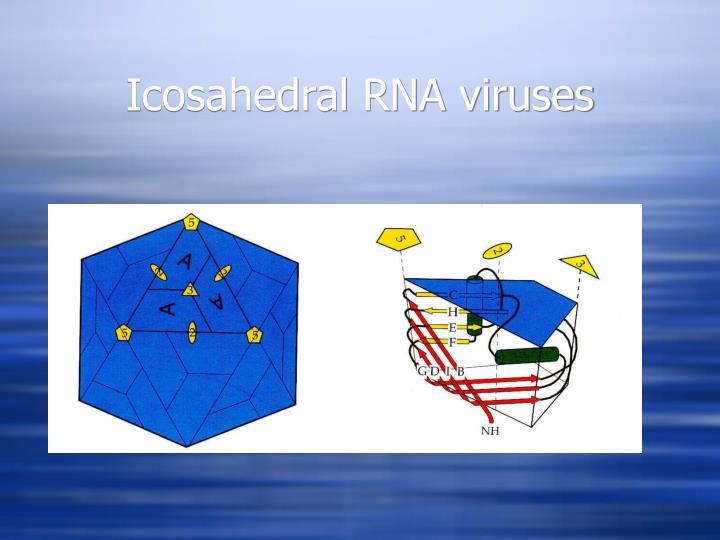 Icosahedral RNA viruses