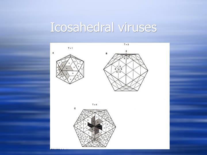 Icosahedral viruses