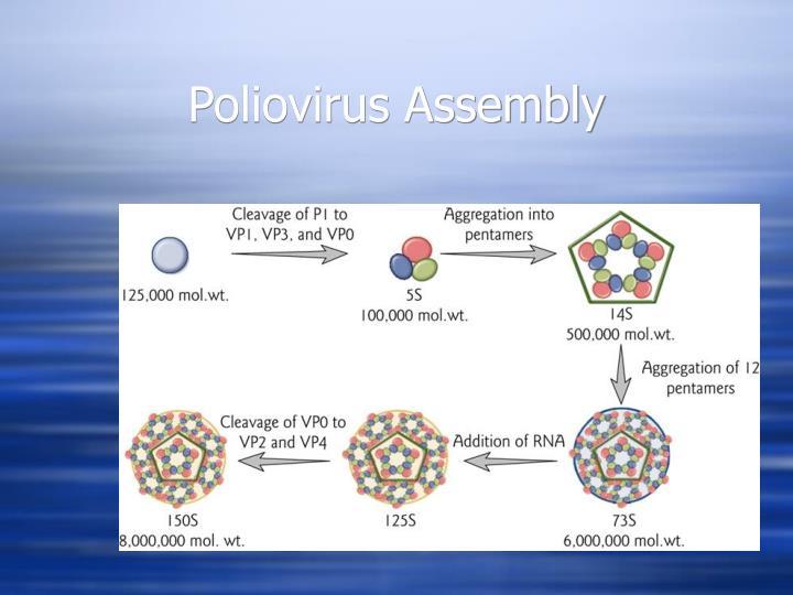Poliovirus Assembly