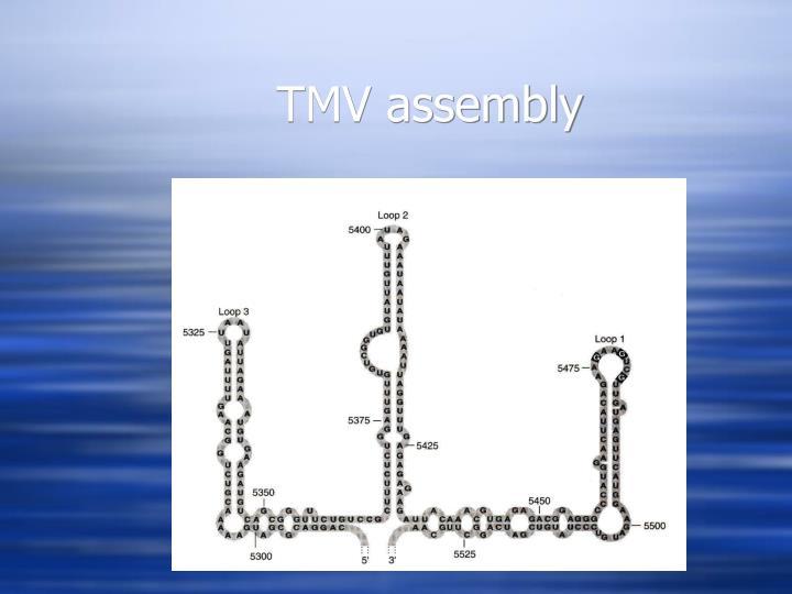 TMV assembly