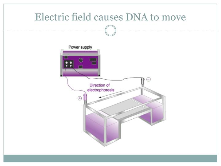 Electric field causes DNA to move