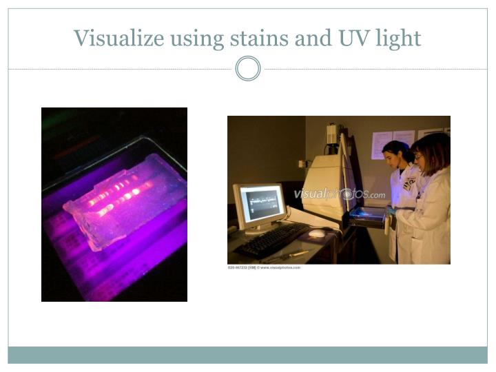 Visualize using stains and UV light