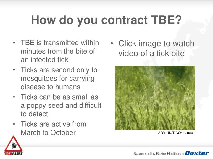 TBE is transmitted within minutes from the bite of an infected tick