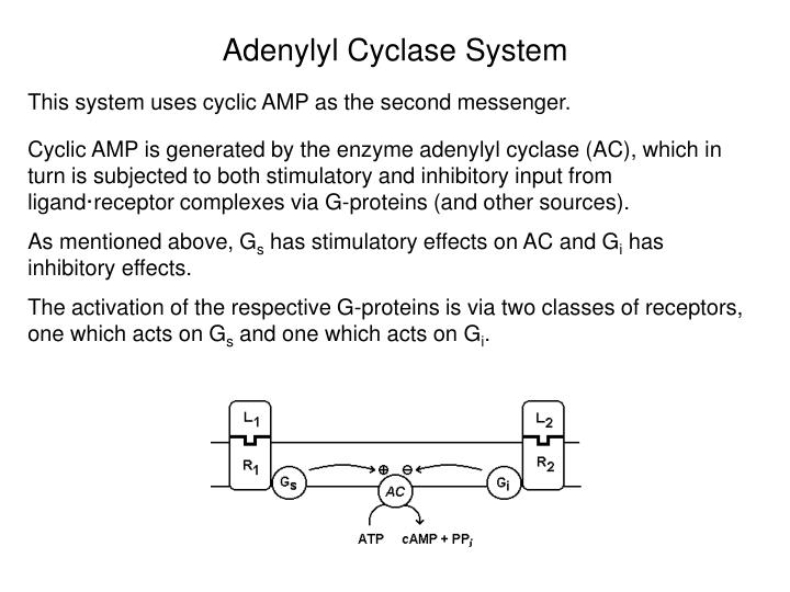 Adenylyl Cyclase System