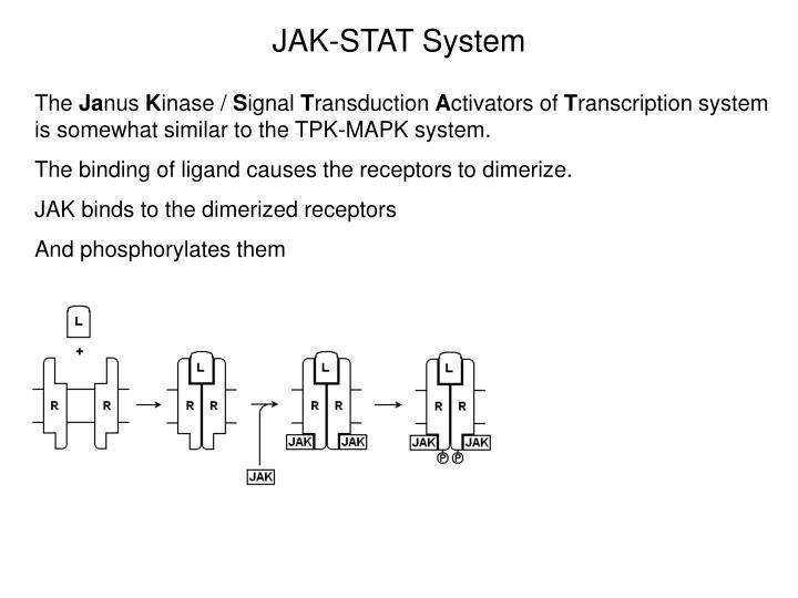 JAK-STAT System