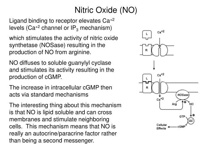 Nitric Oxide (NO)