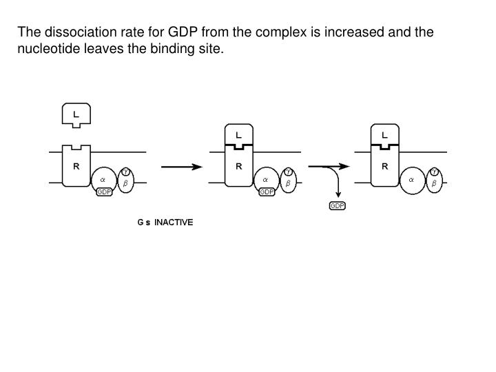 The dissociation rate for GDP from the complex is increased and the nucleotide leaves the binding site.