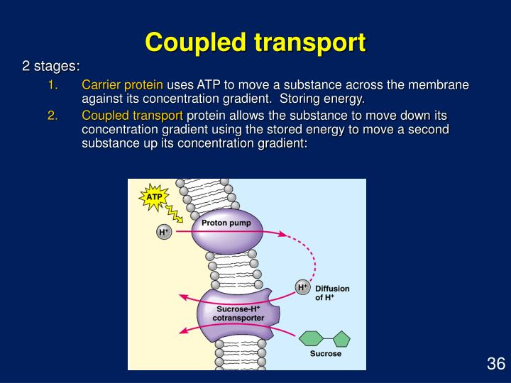 Coupled transport