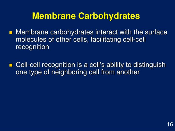 Membrane Carbohydrates