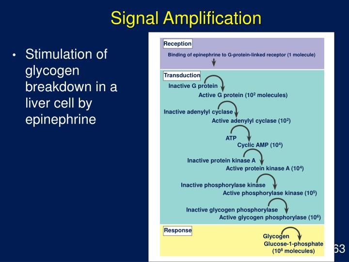 Signal Amplification