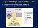 signal pathways signal amplification