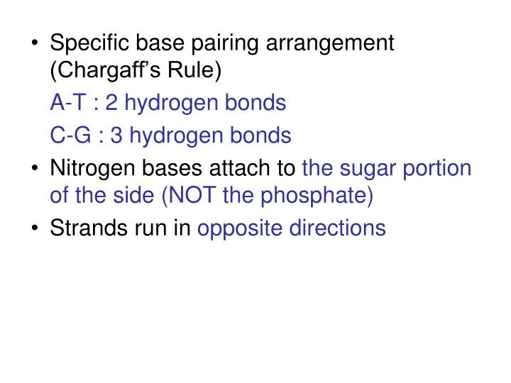 Specific base pairing arrangement (Chargaff's Rule)